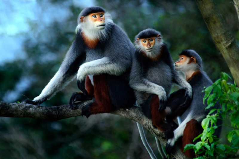 monkeys-in-cuc-phuong-national-park