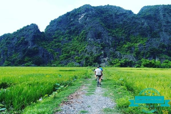 Tam-Coc-Rice-Fields