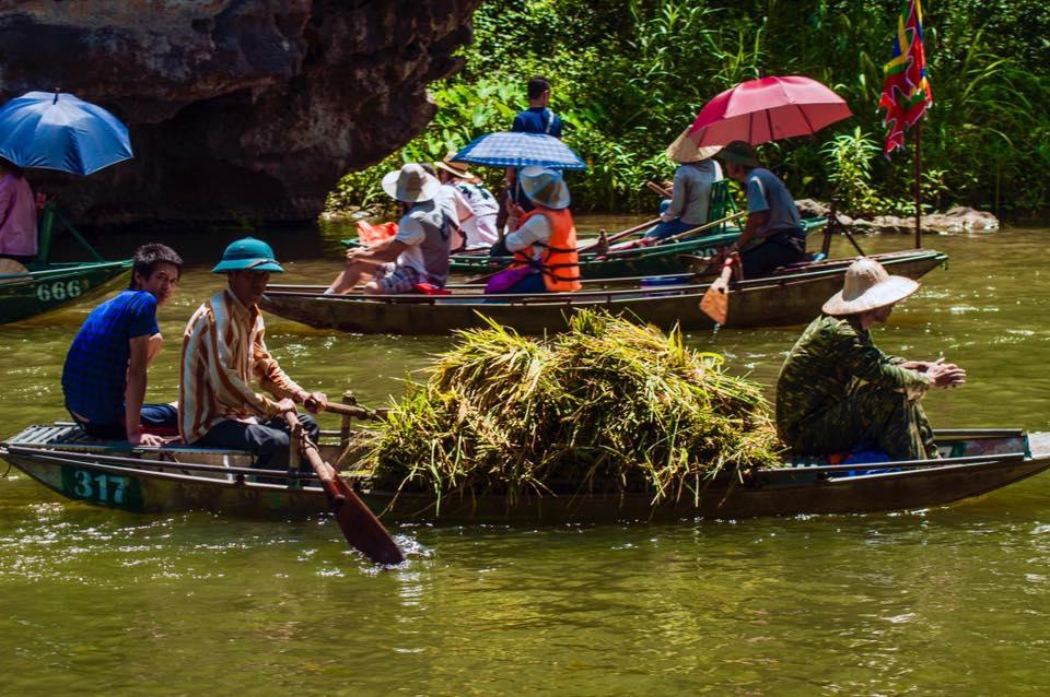 Tam-coc-in-harvest-rice-season