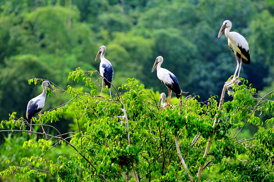 Thung-nham-bird-garden-eco-tourism-area