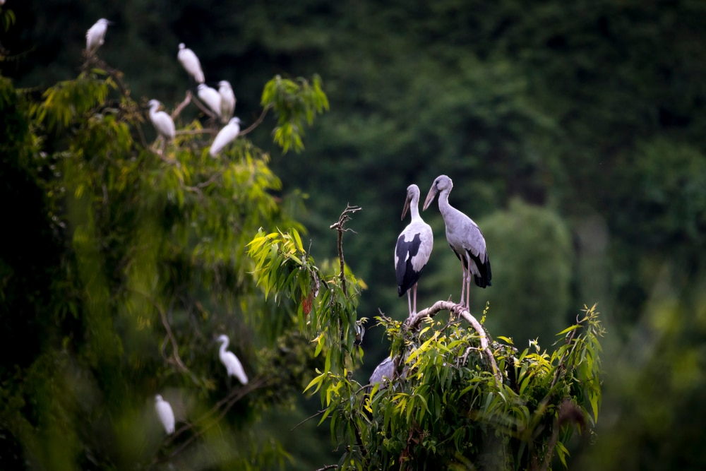 birds-in-thung-nham-valley