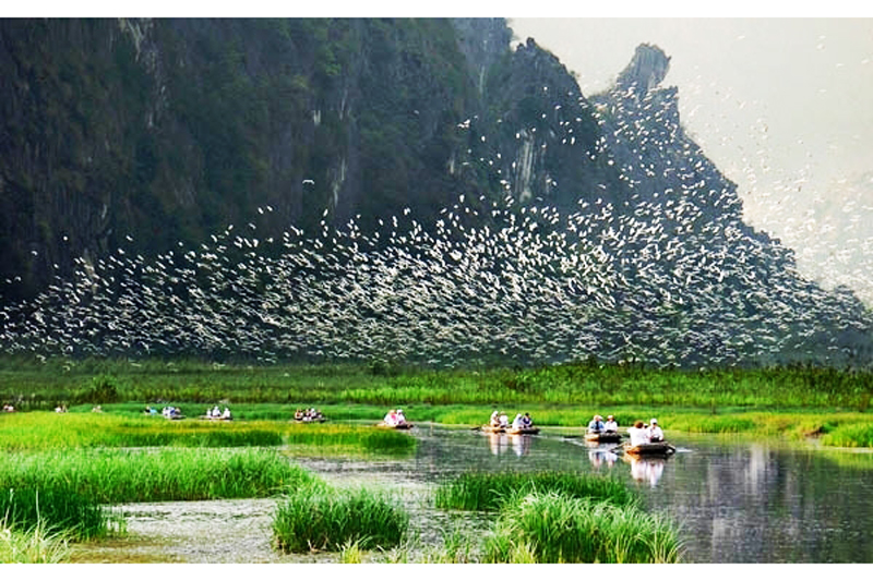 thung-nham-bird-valley-in-ninh-binh