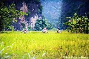Biking-tour-on-golden-rice-fields-in-ninh-binh