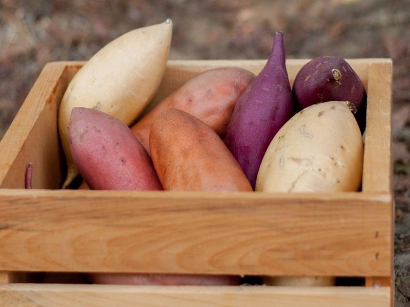 Hoang-Long-sweet-potato-ninh-binh